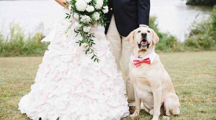 Lavorare con i cani, il dog sitter per matrimoni! Wedding ...